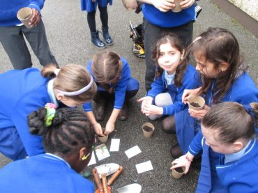 Planting Strawberries, Potatoes and Seeds